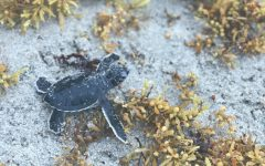 """Lights Out"" for turtles on the Florida coast"