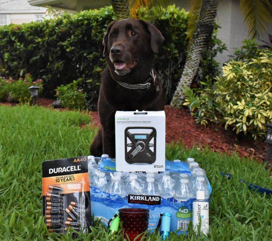 Jupiter+volunteers+help+dogs+find+forever+homes